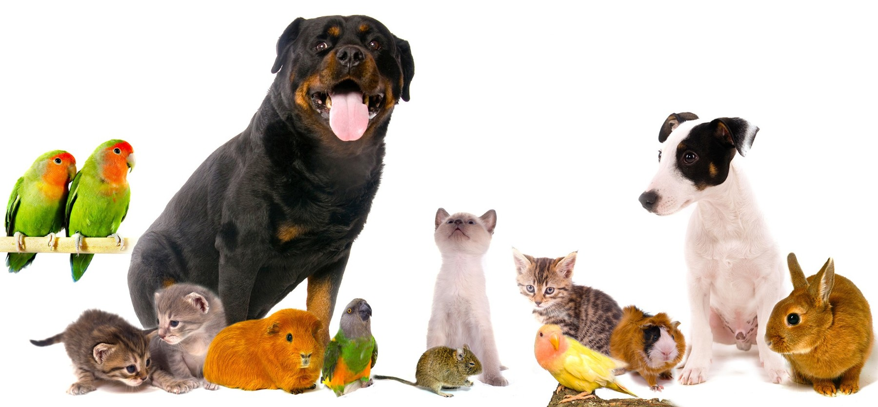 cfavm-vets-pet-collage-e1406311281932.jpg